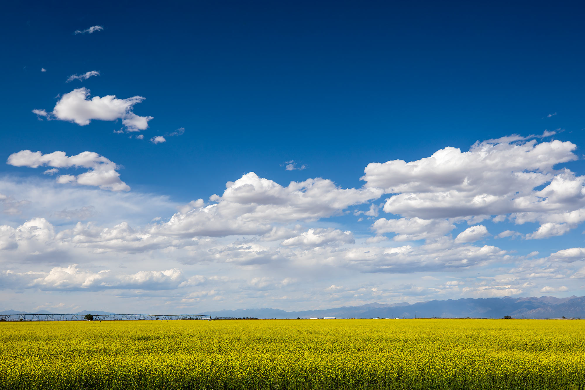 A canola farm under blue skies |  Scott Gable industrial photographer