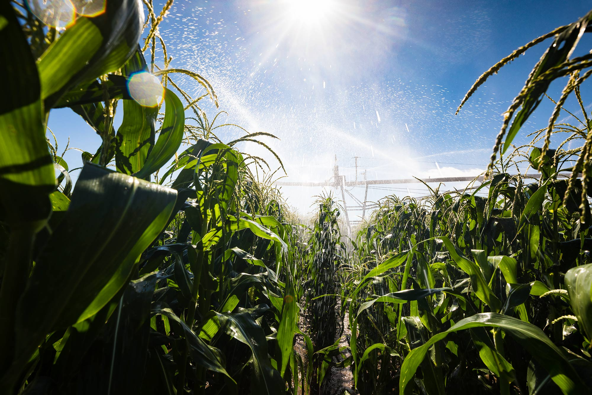 Linear irrigation system watering corn | Scott Gable industrial photographer
