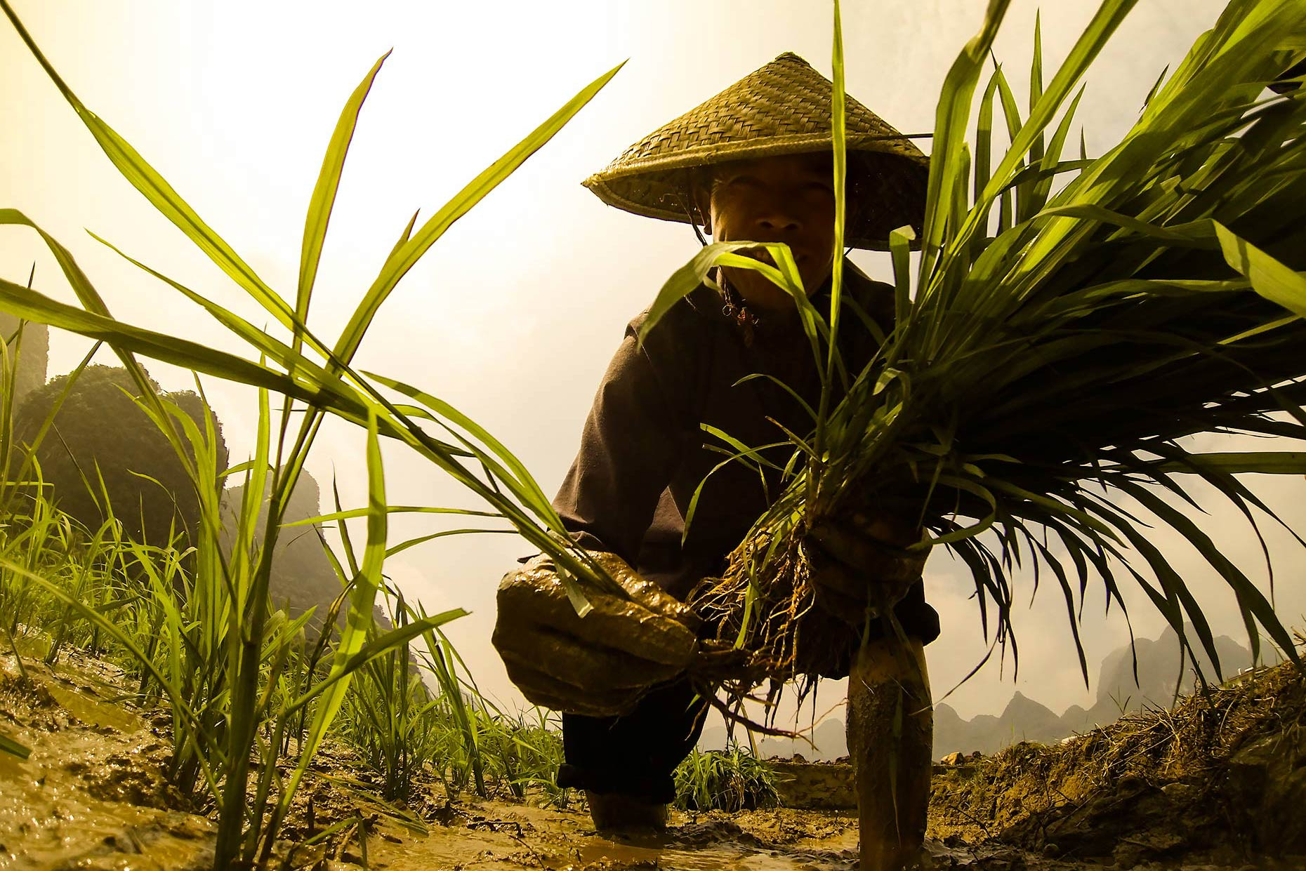 Rice-farmer-china