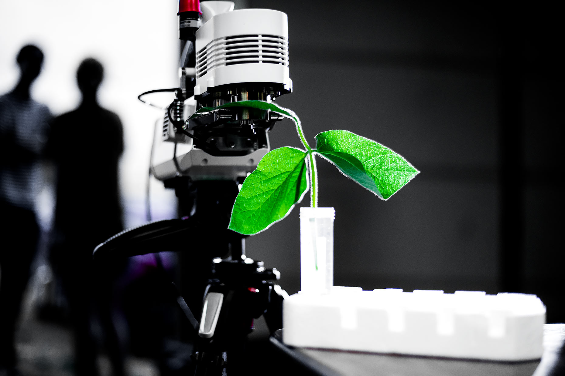 Plant sample in test tube with microscope |  Scott Gable industrial photographer