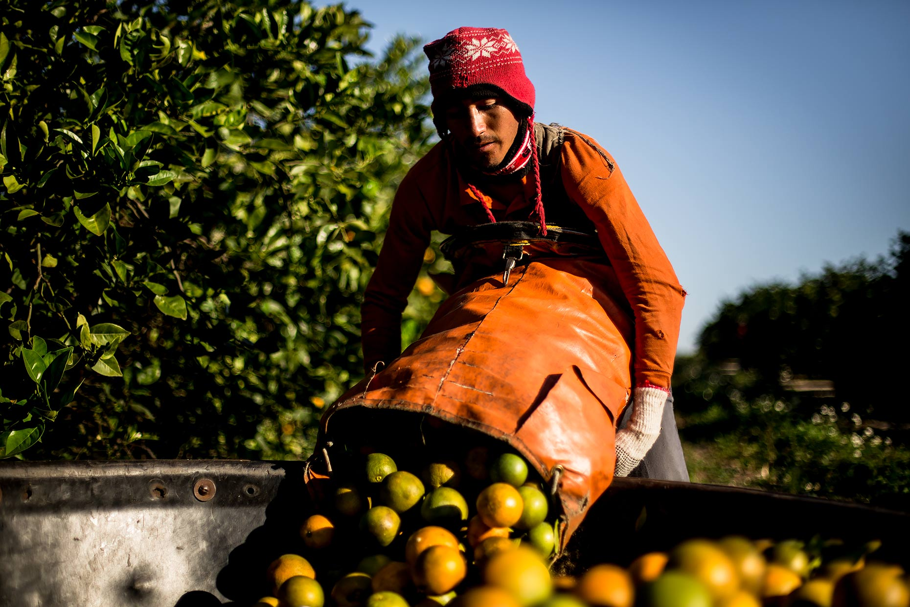 orange farmworker harvest florida  | Scott Gable is an advertising and editorial photographer providing photography and video to corporate, industrial, medical and bio-science clients worldwide.