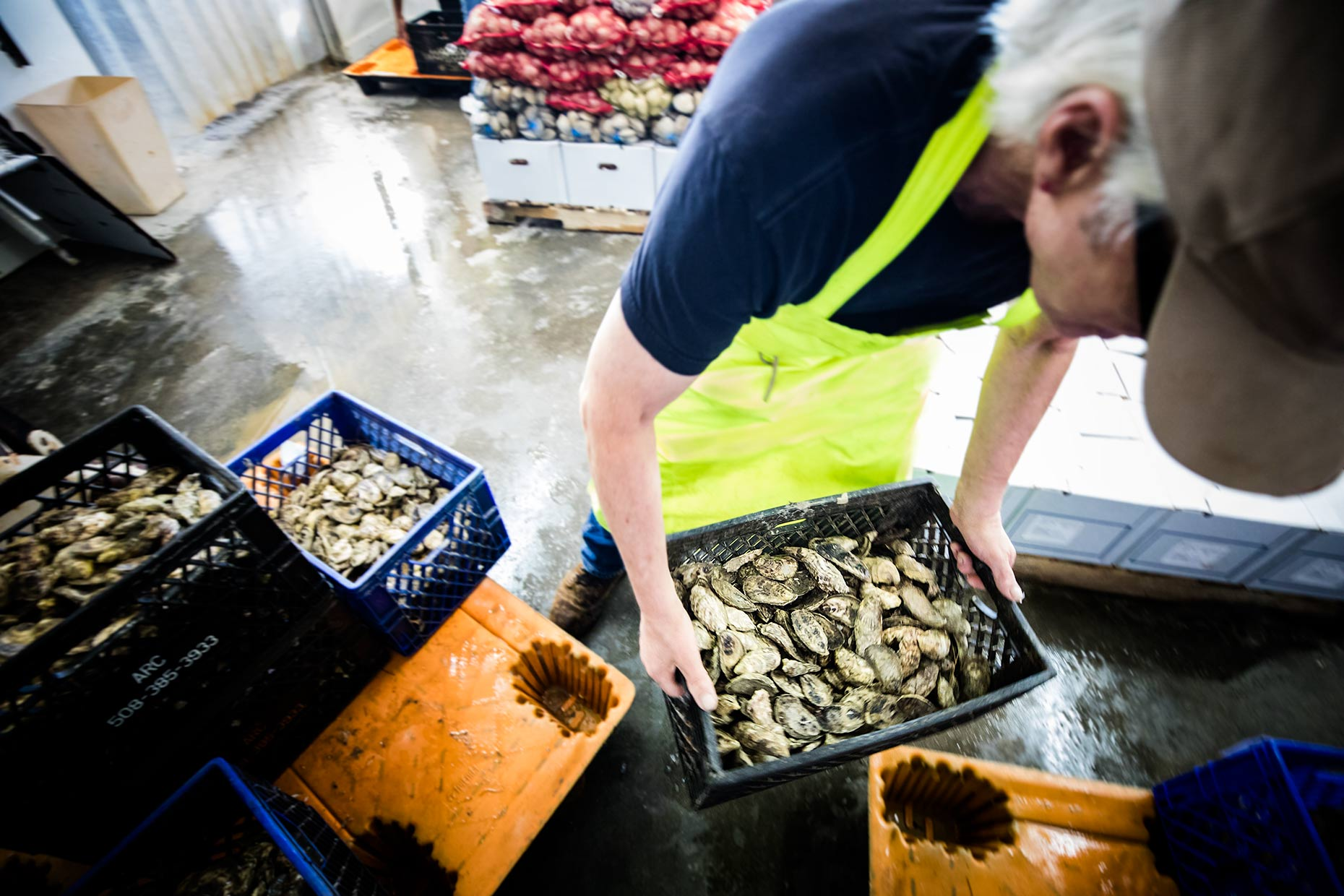 oyster-cleaning-packing