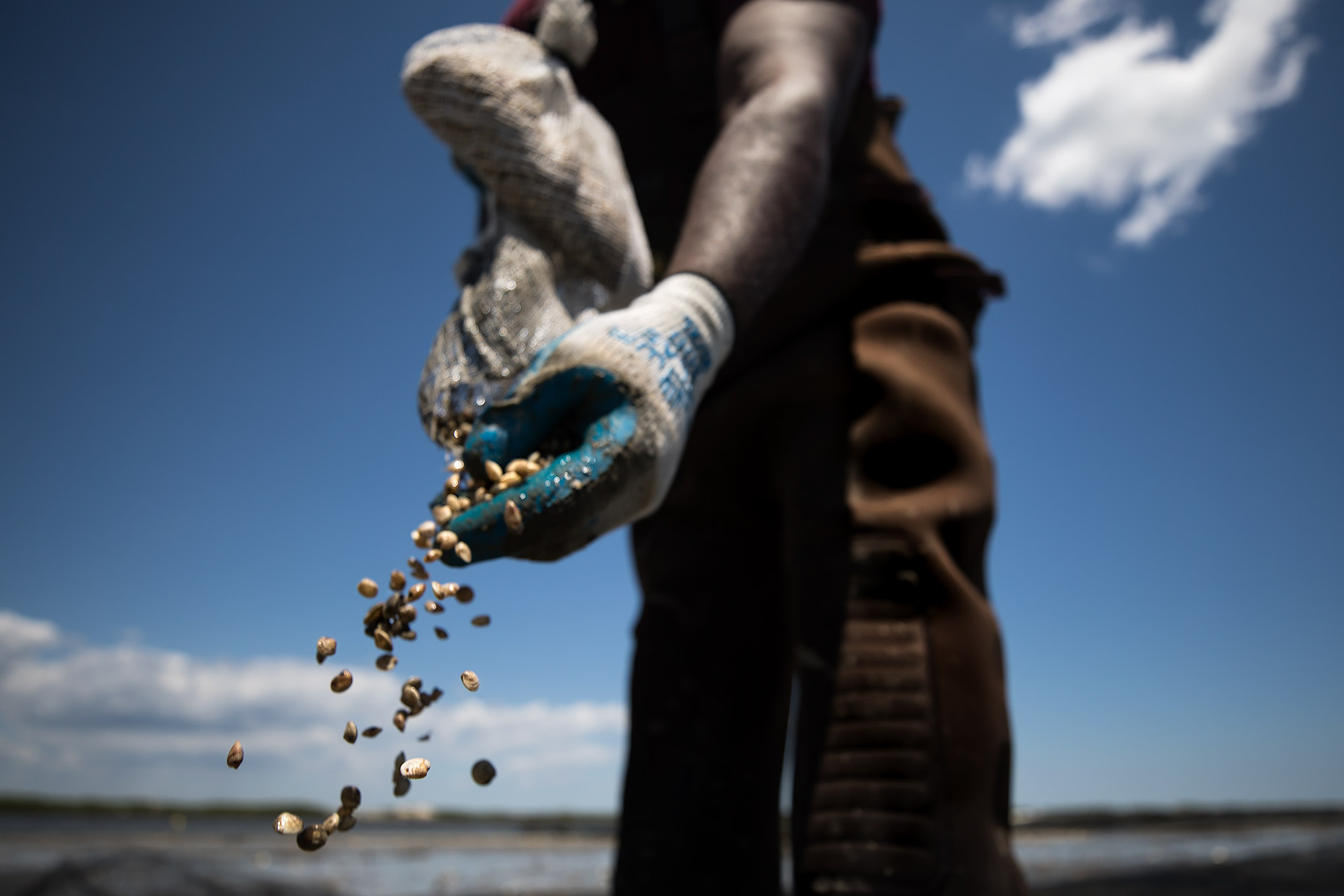 A farmer throws oyster seed on a growing bed | Scott Gable industrial photographer