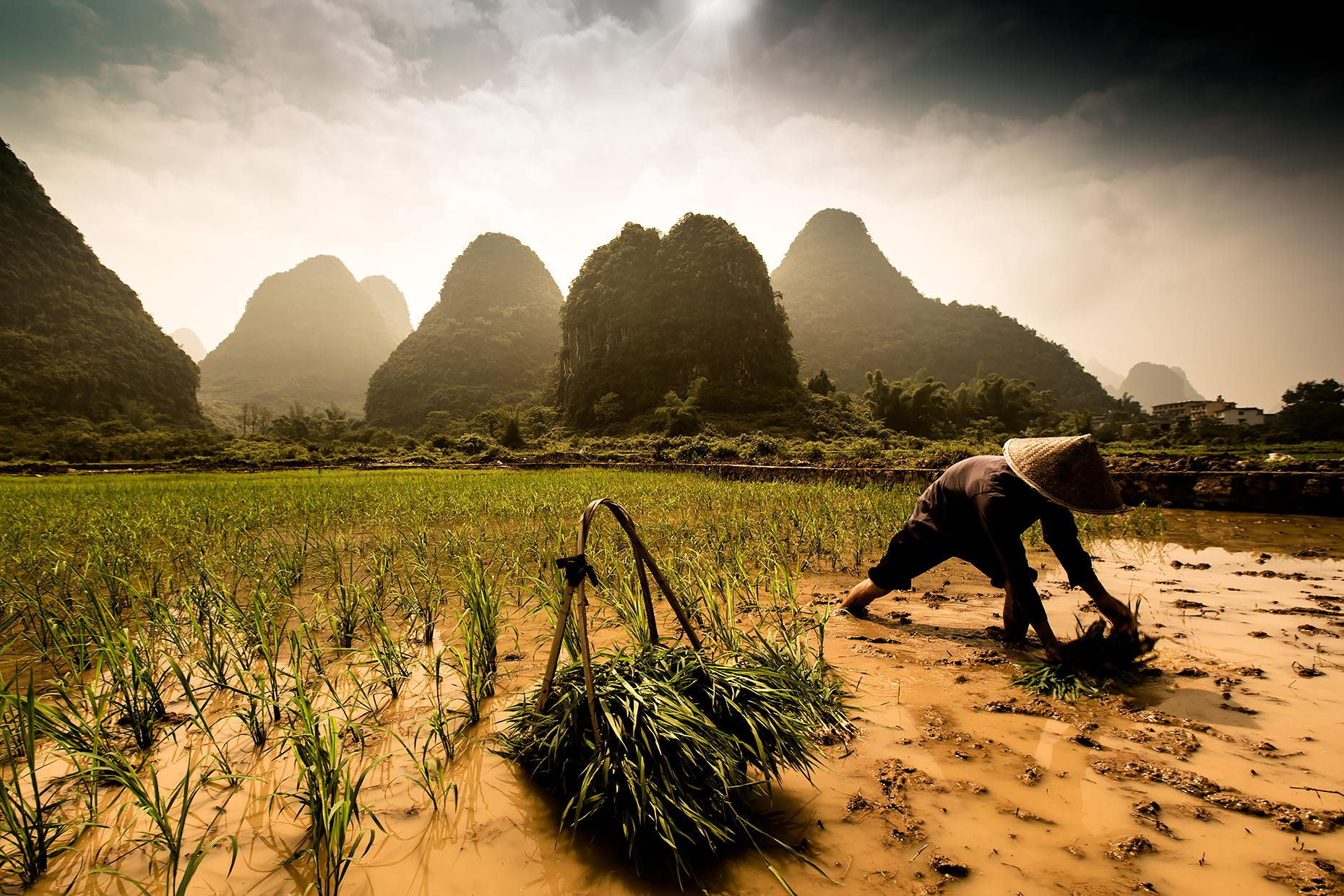 rice farm china  | Scott Gable is an advertising and editorial photographer providing photography and video to corporate, industrial, medical and bio-science clients worldwide.